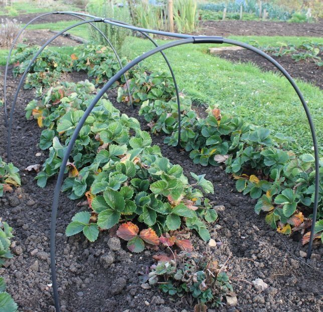Garden Hoops and Tunnel Kits from Gardening Naturally