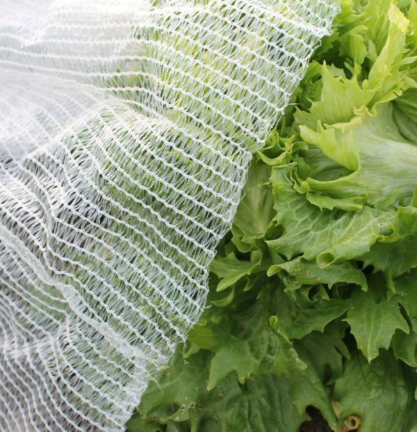 What Garden Frost Protection Is Right For Me?