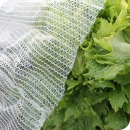 Netting & Frost Protection
