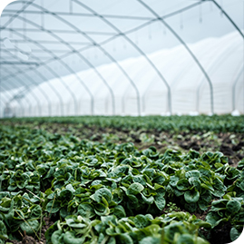 Greenhouse Care & Sowing