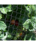 Anti Bird Netting for Fruit & Vegetable Protection