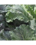 Butterfly Netting to Stop Cabbage Whites