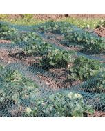 Green Bird Netting for Fruit and Vegetables