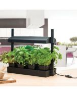 Micro Grow Light Garden for Salads and Herbs