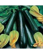 Organic Courgette Seed