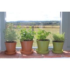Compostable Bamboo Plant Pots