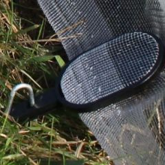 Crop Cover Netting and Fleece Clips