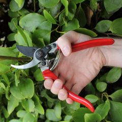 Professional Pruner DP30