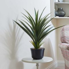 Artificial Spiky Houseplant