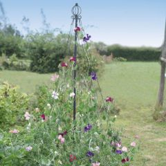 Maypole Plant Support for Flowers or Beans