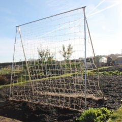 Pea and Runner Bean Frame - 2m Long