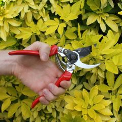 Darlac Professional Left Handed Pruner DP631