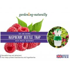 Raspberry Beetle Trap and Refills