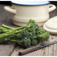 Organic Broccoli Seed - Green Sprouting