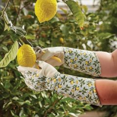 Sicilian Lemon Gauntlet Glove