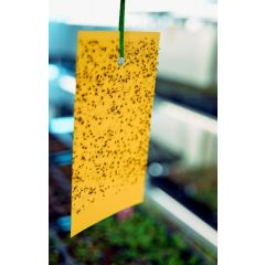 Yellow Sticky Insect Traps For Whitefly Control