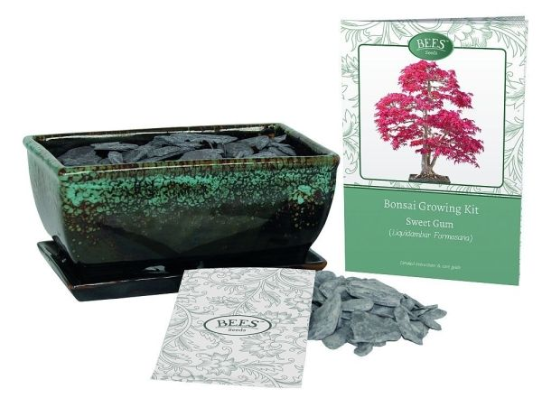 Grow Your Own Bonsai Set - Sweetgum