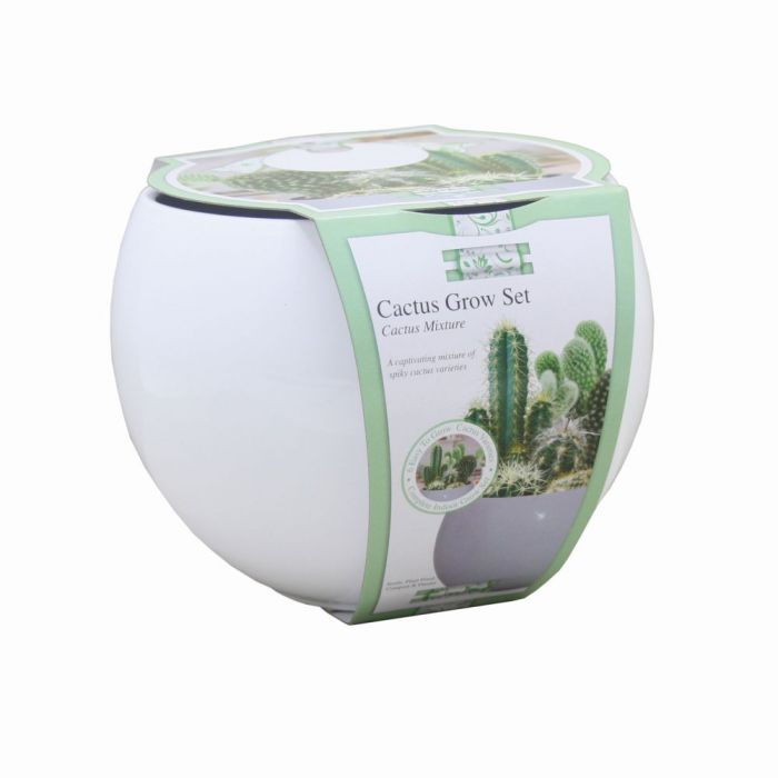 Grow Your Own Cactus Plants