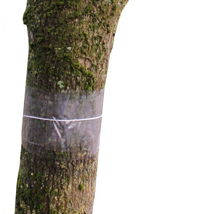 Clear Fruit Tree Glue Bands 5m