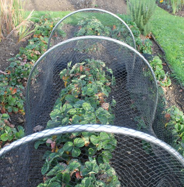 Large High Top Hoop Tunnel Kits with Garden Netting