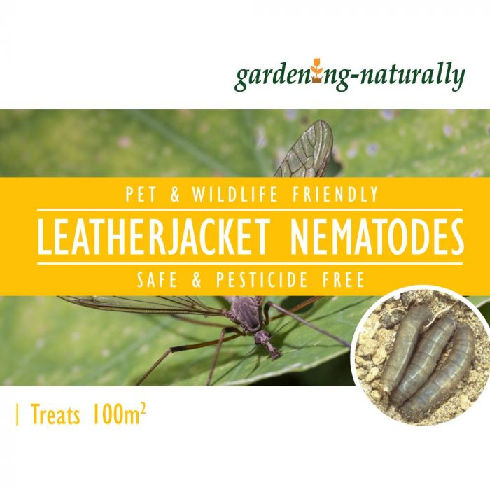 Leatherjacket Nematodes 100 sq.m
