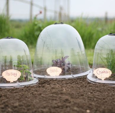 Pack 3 Popular Bell Cloches