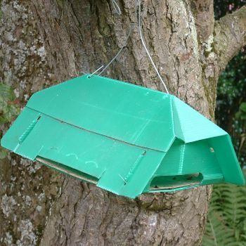 Pea Moth Trap and Refills