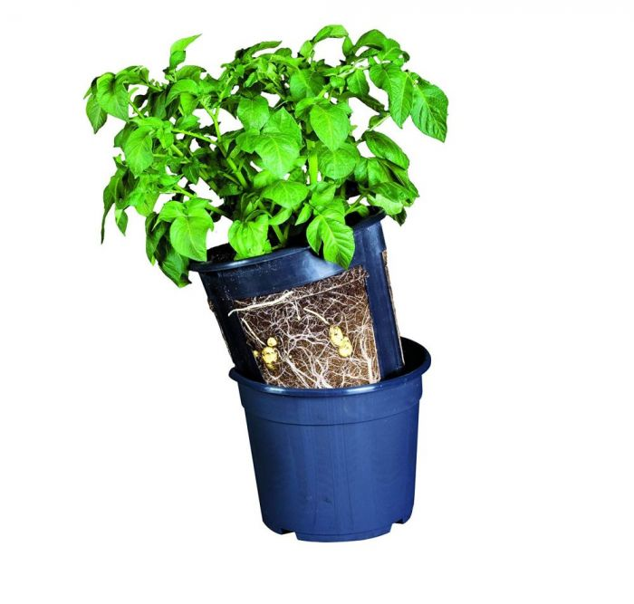 Potato Grow Pot - Pack of 3