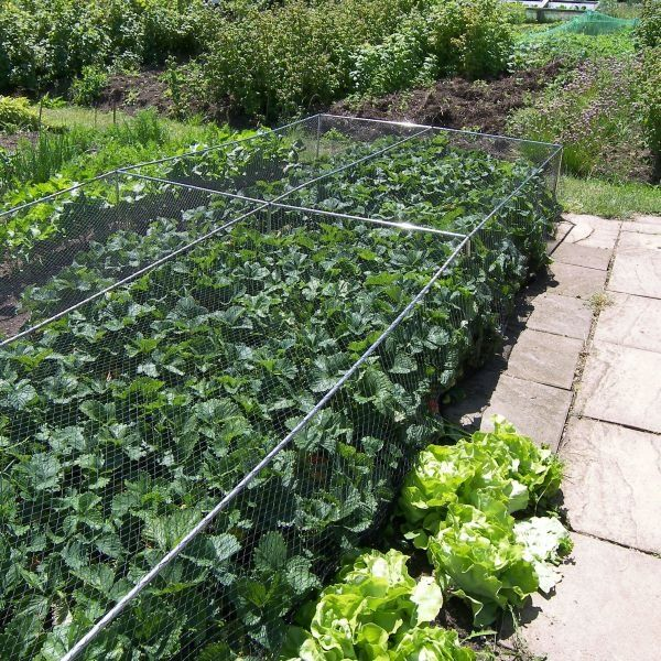 Fruit And Vegetable Cages 500mm High