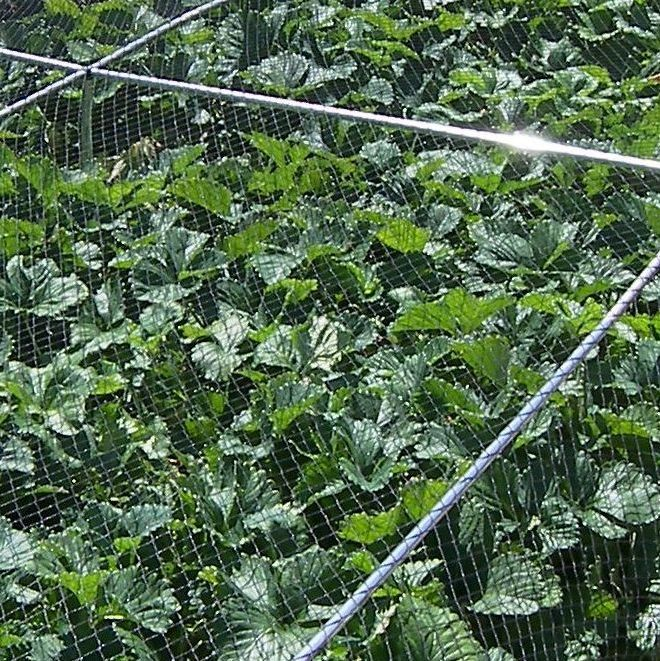 Strawberry Cages with or Without Netting