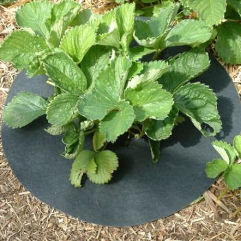 Strawberry Mats Keep Crops Clean
