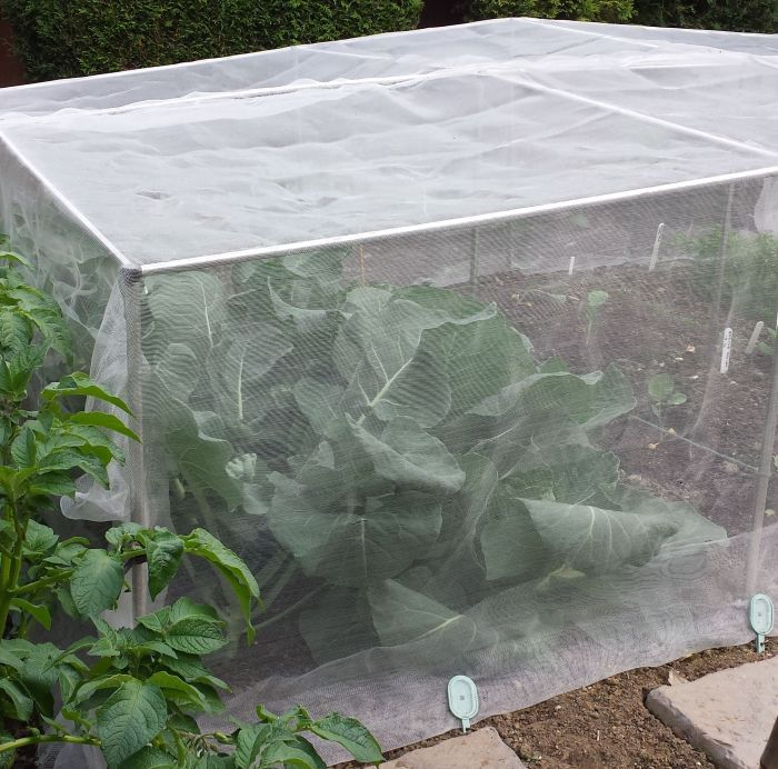 Fruit and Vegetable Cages 700mm High